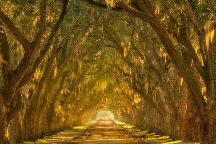 أجمل الصور لممرات تحت الأشجار Amazin19
