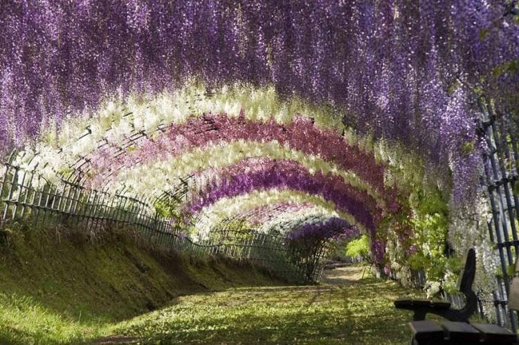 أجمل الصور لممرات تحت الأشجار Amazin20