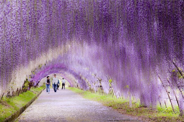 أجمل الصور لممرات تحت الأشجار Amazin21