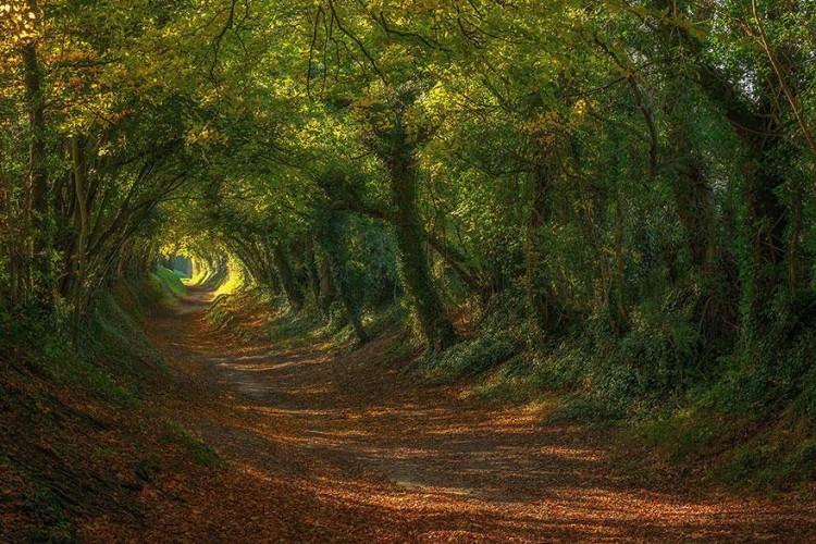 أجمل الصور لممرات تحت الأشجار Amazin22