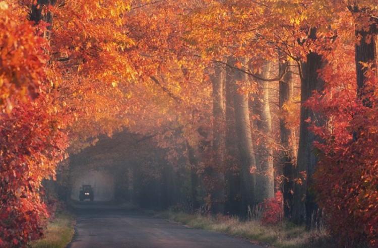 أجمل الصور لممرات تحت الأشجار Amazin23