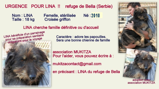 LINA - F-X griffon, née 2010, taille moyenne (Bella) - Prise en charge Refuge PAS SI BETES - Page 2 Lina_f11