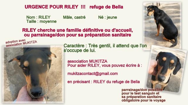riley - RILEY - Né 2014 - 25 kg - Très gentil loulou - (BELLA) - Prêt à rentrer novembre 2020 Riley_10