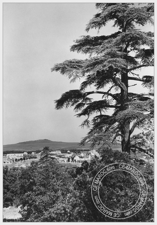 Ifrane, les cèdres. 08-29411