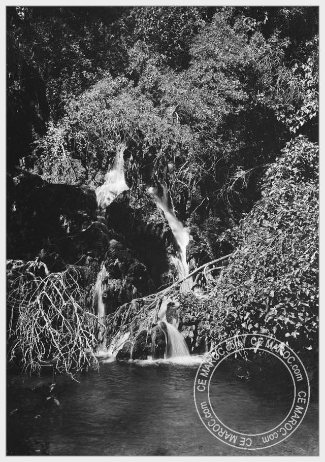 Ifrane, les cèdres. 09-29510