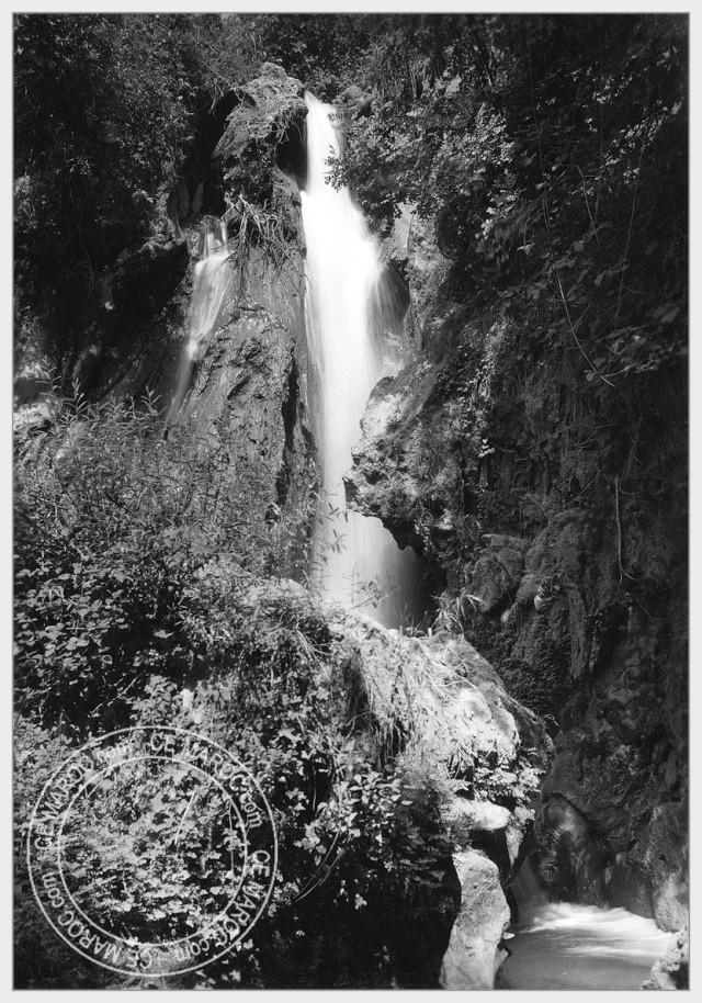 Ifrane, les cèdres. 11-29710