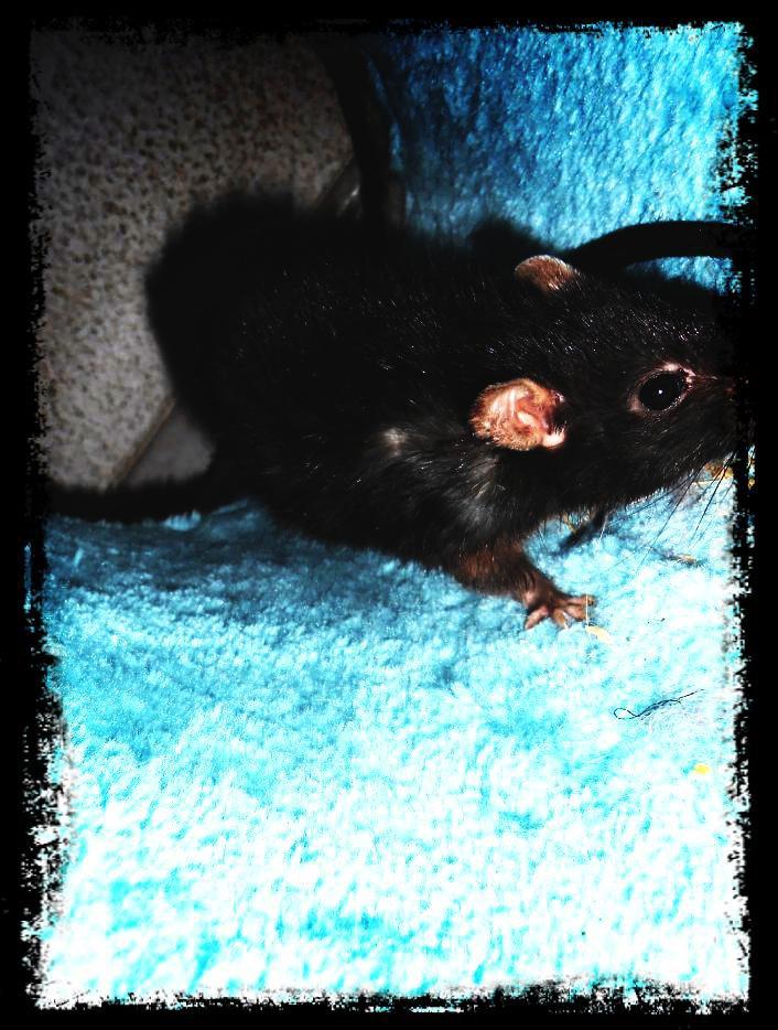 mon Arbre à Rats 32273911