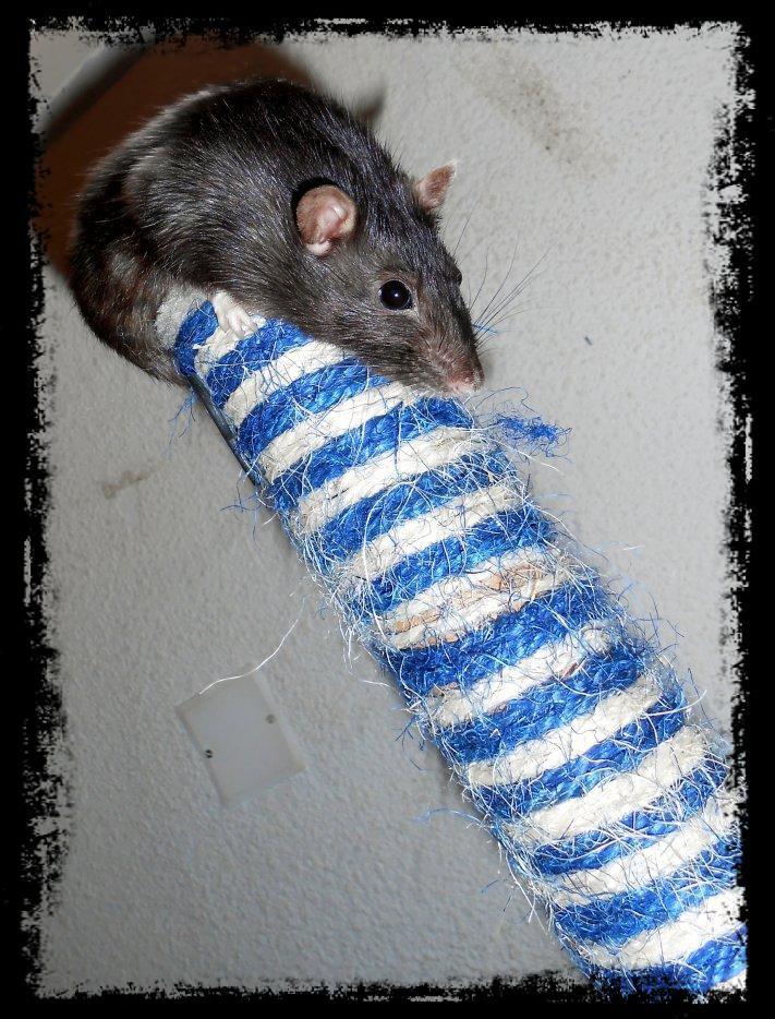 mon Arbre à Rats 32273913