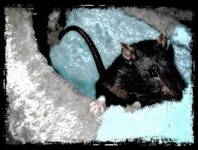 mon Arbre à Rats 32273914