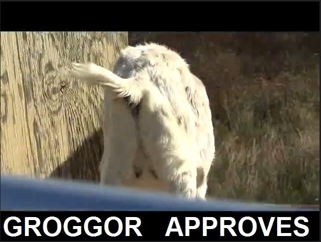 tutta per marco Goat11