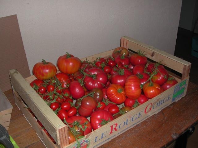 Solanum lycopersicum - les tomates - Page 5 Dscn4511