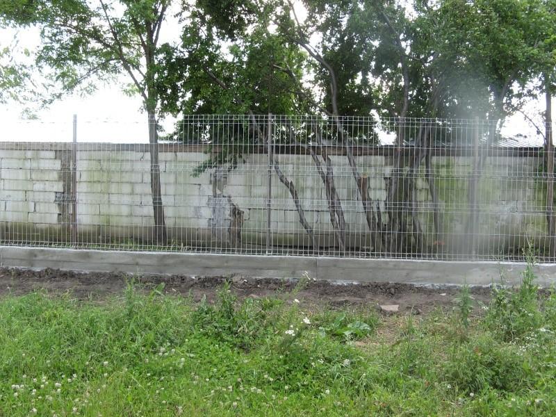 CONSTRUCTION D'UNE CLOTURE POUR LE REFUGE DE LENUTA Pictu111