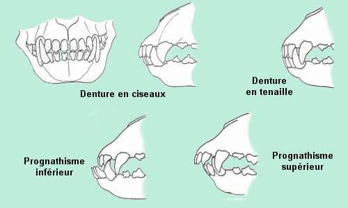 Les dents et machoires  Img_0521
