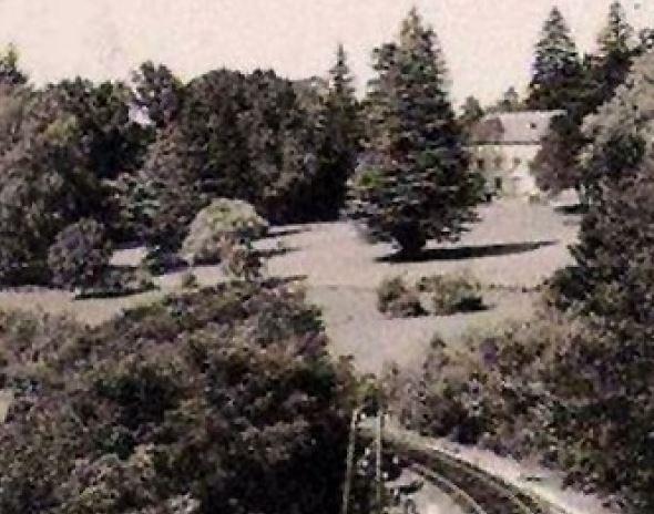 un cèdre dans le parc Cedre10