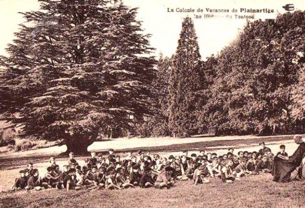 un cèdre dans le parc Vcaaaa10