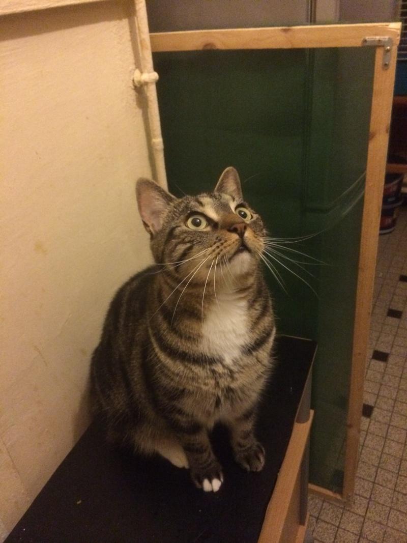 Hector, adorable jeune male tigré castré  né le 16/04/2012 (Adopté) - Page 2 Img_0415