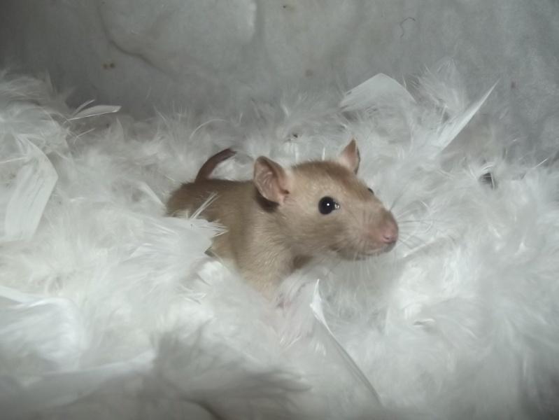 Mes ptits gars des Rat-valets - Page 2 32678410