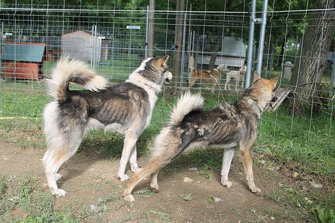 A placer: les chiens de Nicolas Vanier Image105