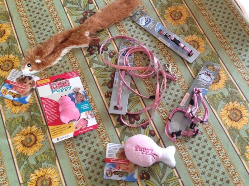 Les accessoires de vos animaux en particulier les chiens.  - Page 4 Image153