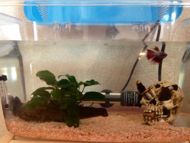 Mon aquarium de 15L Image46
