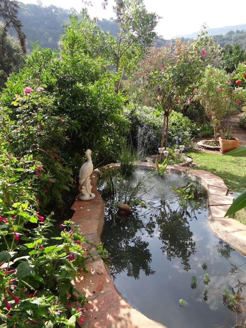 bassin enya Dsc04810