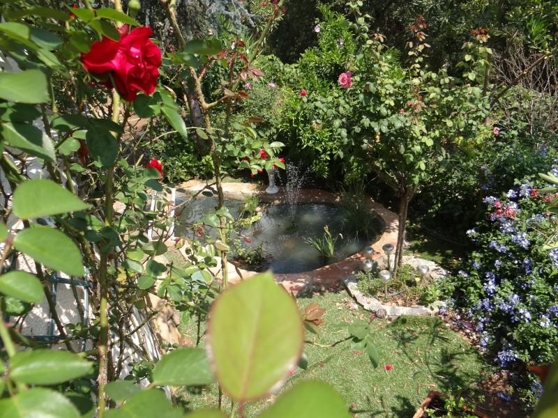 bassin enya Dsc04911