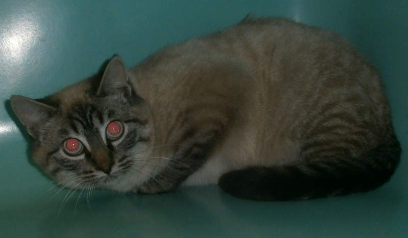 Photos des chats sauvés, avant/après - Page 5 31951010