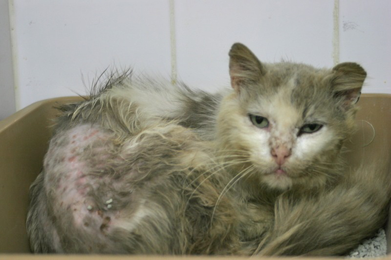 Photos des chats sauvés, avant/après - Page 6 _mg_2910