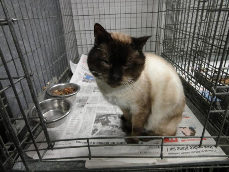 Photos des chats sauvés, avant/après - Page 4 Cresus10