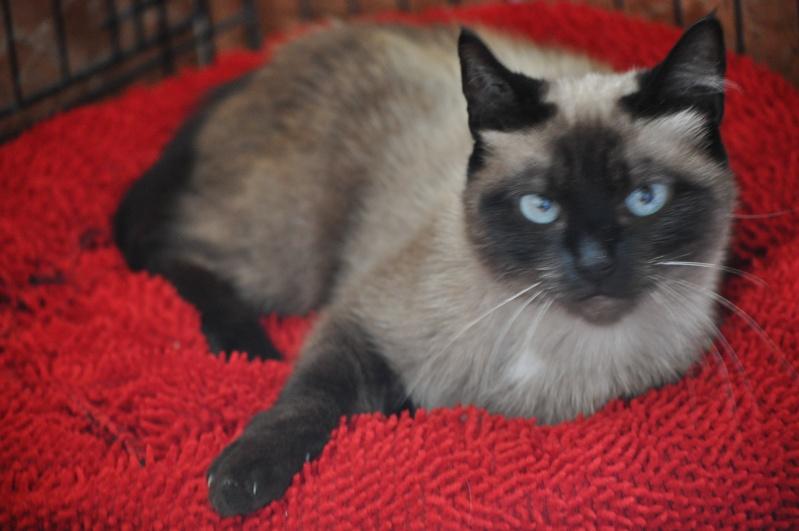 Photos des chats sauvés, avant/après - Page 5 Dsc_0510