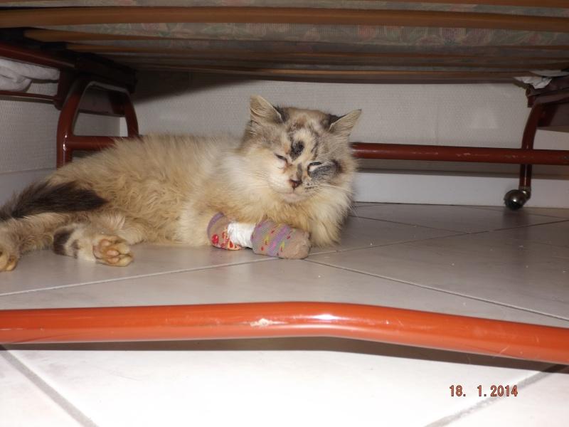 Photos des chats sauvés, avant/après - Page 4 Dscf1110
