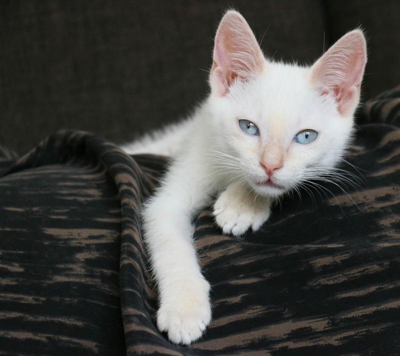 Photos des chats sauvés, avant/après - Page 6 Img_8810