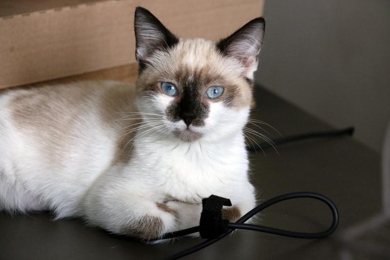 Photos des chats sauvés, avant/après - Page 6 Img_8811
