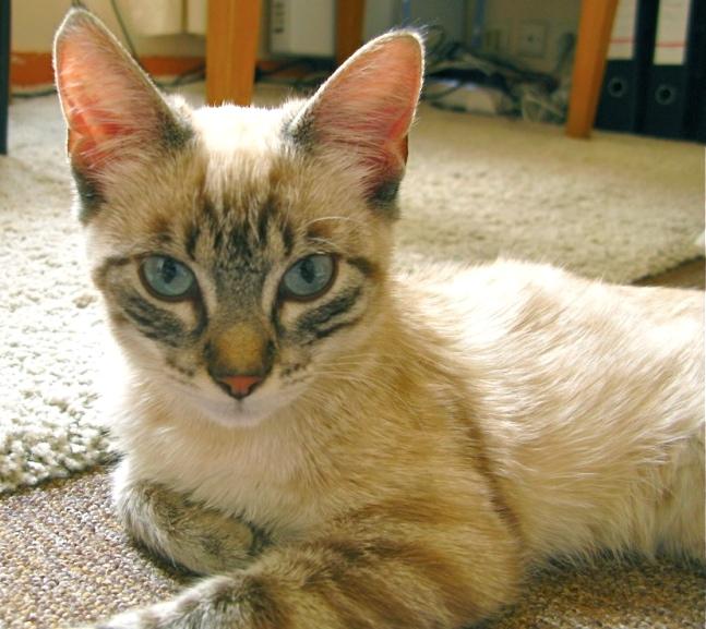 Photos des chats sauvés, avant/après - Page 4 Madoul11