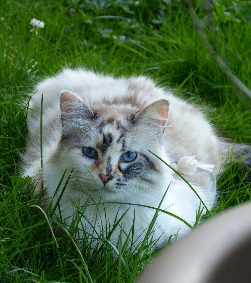 Photos des chats sauvés, avant/après - Page 4 P1020510