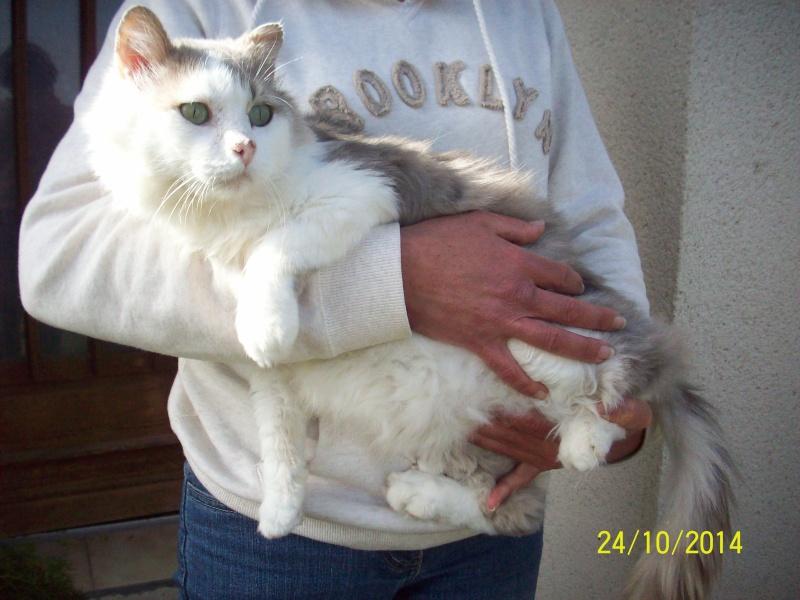 Photos des chats sauvés, avant/après - Page 6 Photos10