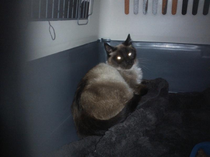 Photos des chats sauvés, avant/après - Page 5 Wp_00310