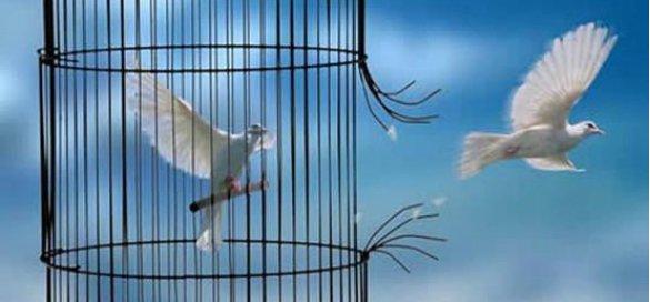Citoyens de Kabylie : APPEL POUR LA LIBERTE DE CONSCIENCE EN KABYLIE 149