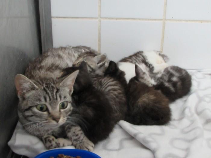 ARRIVEE de MELODIE et ses 5 chatons 12/08/14 00417
