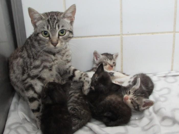 ARRIVEE de MELODIE et ses 5 chatons 12/08/14 00515