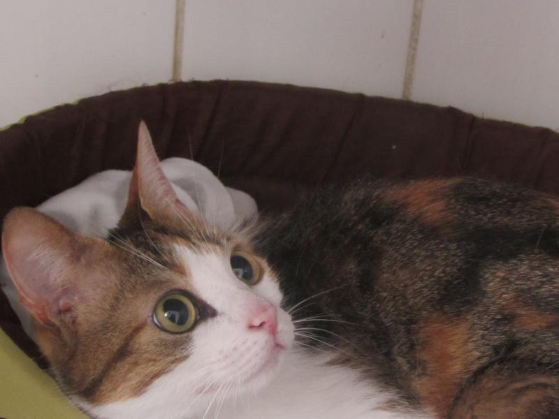 juillet 2014 - Lana et ses 2 chatons 04014
