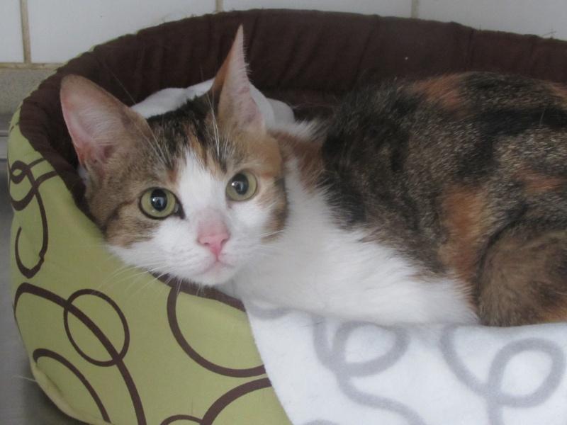 juillet 2014 - Lana et ses 2 chatons 04112