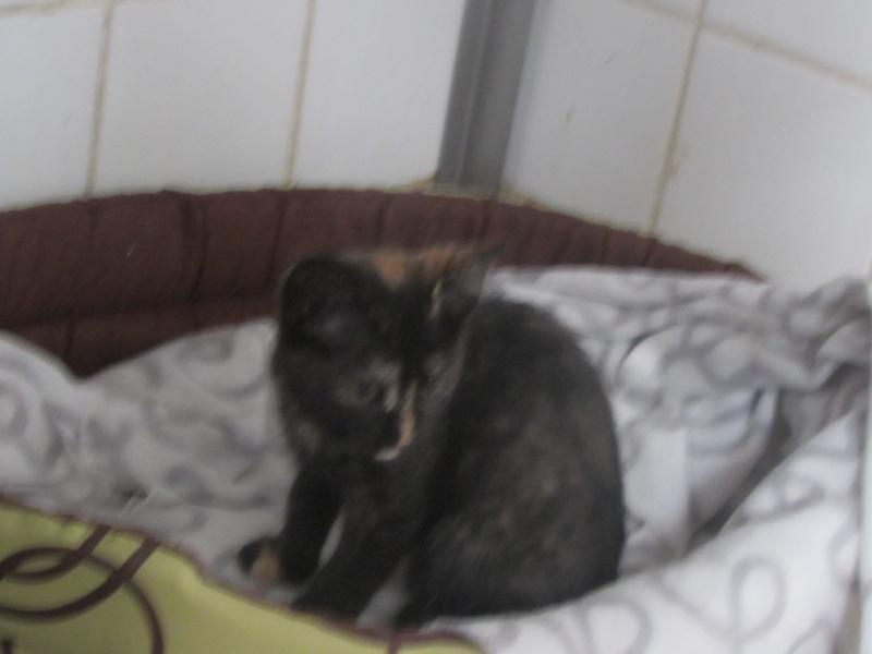 juillet 2014 - Lana et ses 2 chatons 04412