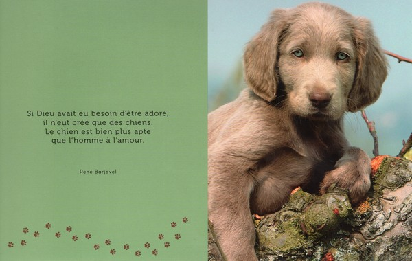 citations sur le chien - Page 2 0a1a5a10