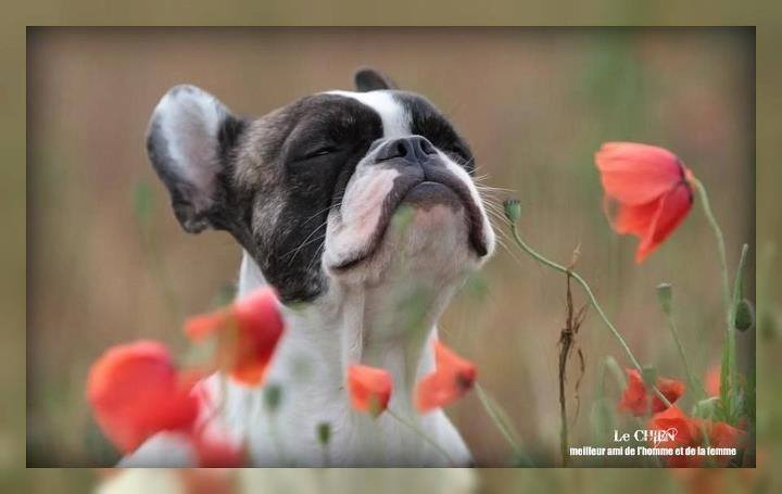 """Concours  photo # 13 : Les animaux """" fleuris"""" - Page 2 10157210"""