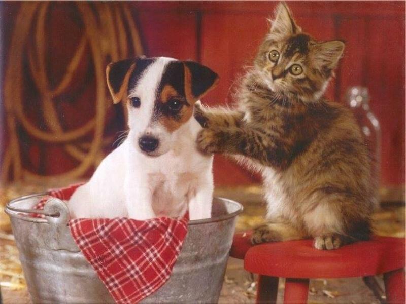 """S""""entendre comme chien et chat-LA VÉRITÉ en vidéos et en images - Page 2 10371410"""