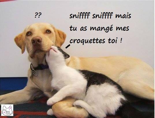 """S""""entendre comme chien et chat-LA VÉRITÉ en vidéos et en images - Page 2 10371910"""