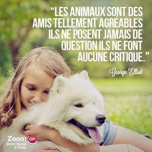 citations sur le chien - Page 2 10387410