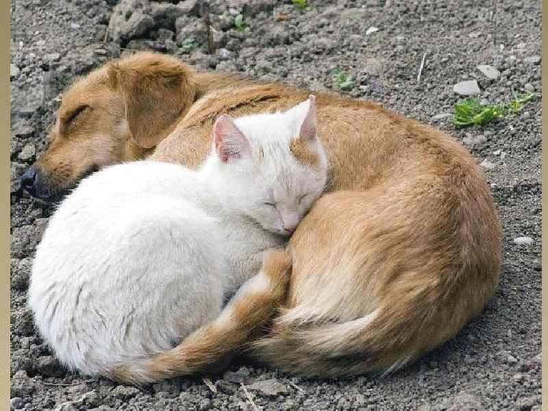 """S""""entendre comme chien et chat-LA VÉRITÉ en vidéos et en images - Page 2 10404410"""