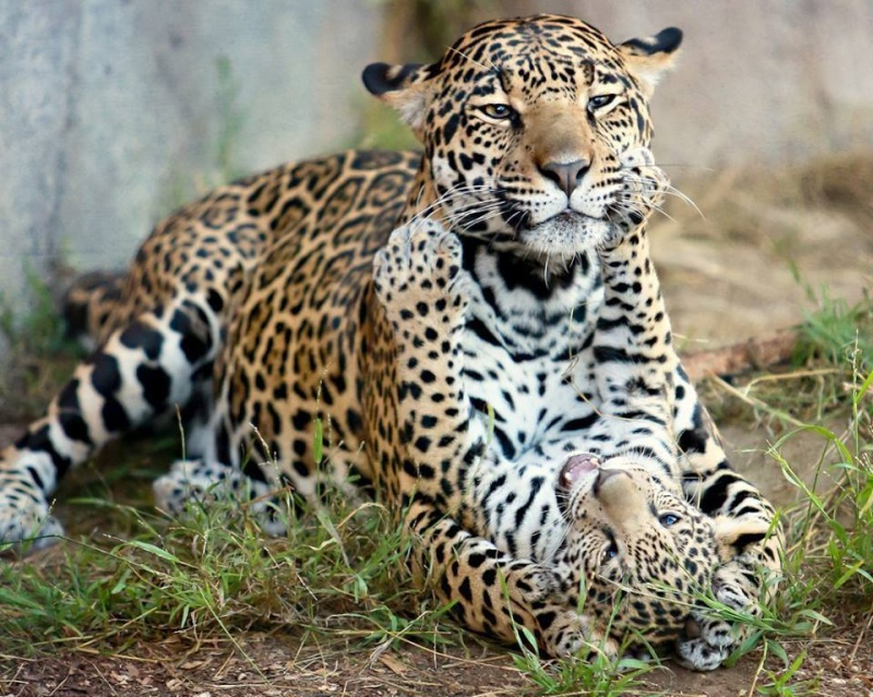 Les mamans et leur bébé 14994910